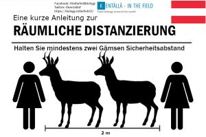 The chamois (although our silhouette is a little on the tall size, or Austrian people are rather small) is such a beautiful animal that Austrians will have a nice time picturing this animal to keep them safe.