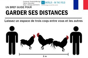 France and the majestic rooster. You know what to do... three roosters between me and you!
