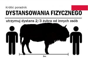 Poland saved the mighty wisent or European bison from extinction and lucky thing too, because it will give them a full 3 m of physical distancing. To adhere to guidelines though, it is possible to use the 2/3 wisent measure.