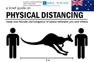 The red kangaroo is sexually dimorphic, and the smaller females turned out to be pretty near perfect for imagining your distance. Please lnclude the tail in your measurement!  Also please send us aboriginal language translations!