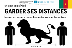 Cameroonians, a lion's distance will keep you safe!  The lions of Cameroon surprised everyone this past May and dispersed over 300 km into the south of the country past urban areas and started living in the forest there.