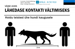 Our wolf looks like he might need a bit of fattening up, or that is his summer coat, but In Estonia please imagine a very large wolf and include the tail to get your safe distance.