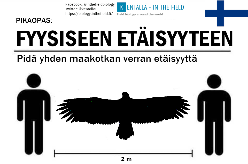In Finland, the golden eagle wingspan works just about perfectly for the 2m measurement. If two meters isn't enough for you Finns, just keep scrolling through this field guide and you will find what you are looking for in the alternative post for Finland.