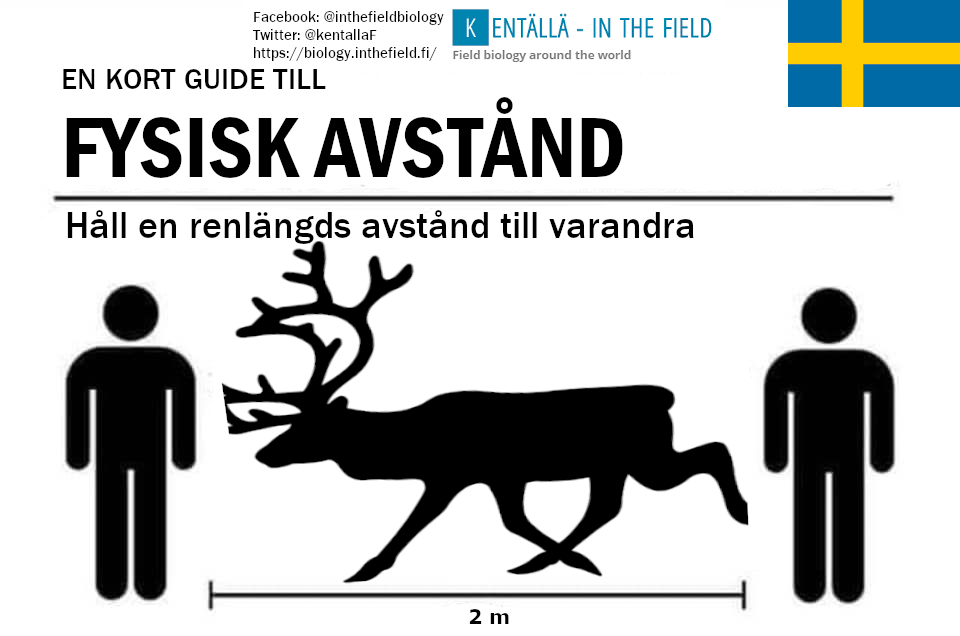 Picturing the reindeer in the north will help Swedes to keep their distance and keep safe!