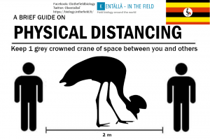 Uganda's grey crowned crane didn't have a terribly convenient silhouette available, but the wingspan is 2 m. Keep that in mind when picturing your safe zone!