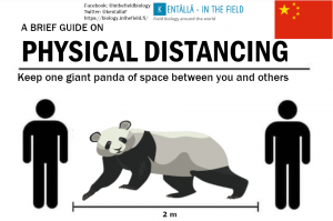 We didn't get the Chinese language version of this yet, but please imagine one quite large panda for your purposes (even our example panda looks a bit stretched out). But apparently the larger ones are 1.9 m, which gets you very close to the appropriate distance.